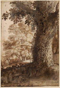 Claude Lorrain, A Study of an Oak Tree, c. 1638. Black chalk, pen and brown ink with grey-brown wash on white paper, 13 by 8 7/8 inches. The British Museum, London.