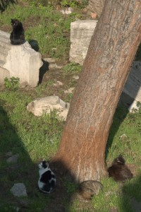 Cat Colony, Largo Argentina, Rome. Photo © 2011 Michael Miller.