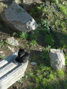 Black Cat in the Sun at the Largo Argentina. Photo © 2011 Michael Miller.