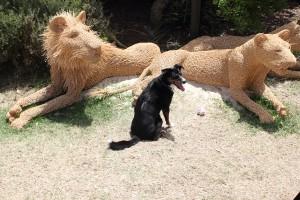 the predators in the park by Belinda Villani. Photo © 2011 Alan Miller.
